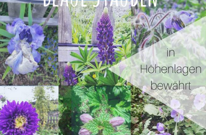 9 & Mehr Blaue Stauden – Blaues Wunder im Garten auf 850 HM