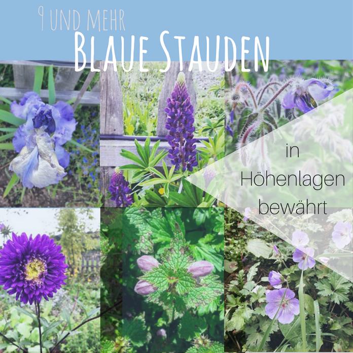 9 Mehr Blaue Stauden Blaues Wunder Im Garten Auf 850 Hm