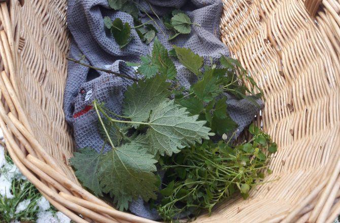 Wildkräuter sammeln und kochen – Projekt von Wildekultur