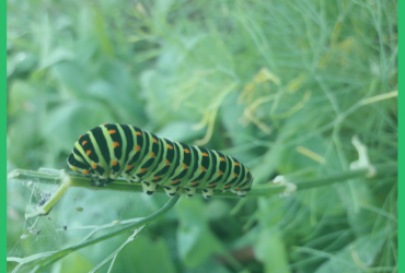 Insektenfreundlicher Garten: bunt, wild, schön