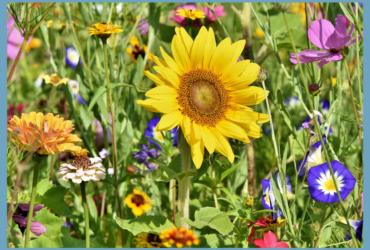 Die 5 Goldenen Regel für den insektenfreundlichen Garten