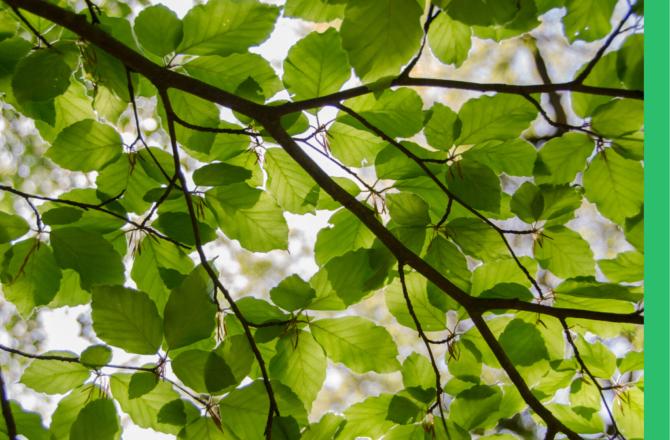 Weniger ist mehr: Diese 3 Gehölze besser nur als Solitär pflanzen
