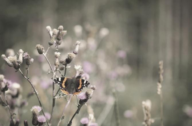 Das Insektensterben – Wieso insektenfreundliches Gärtnern die Zukunft sichert