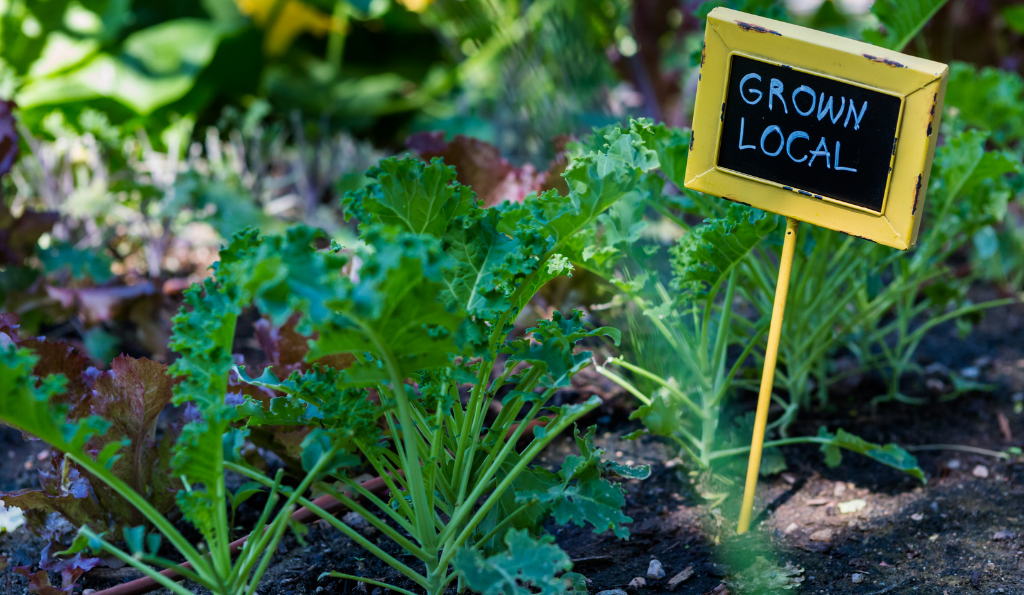 Urban Gardening Worms – Ein Privatgarten wird Teil des Wormser Gartenglücks