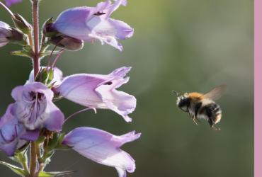 6 Phantastische Wildbienen-Arten und wo sie zu finden sind